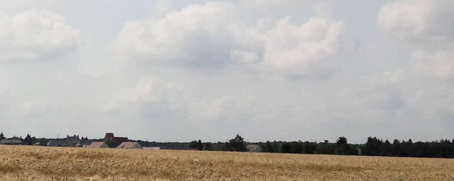 Campos de trigo hasta donde alcanza la vista en la Petite Beauce