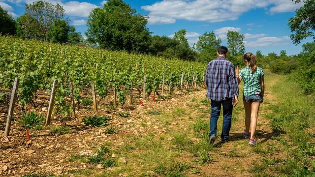 Senderismo por las viñas en Blois-Chambord